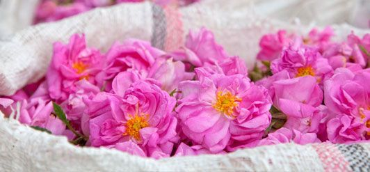 These petals were used to produce Africa's first ever organic rose oil.